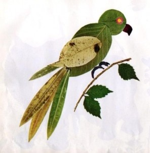 Družinska urica: Papagaj Bine